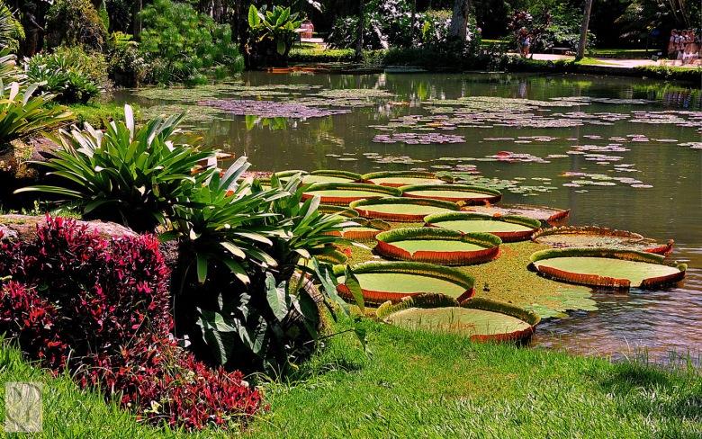 jardim-botanico1